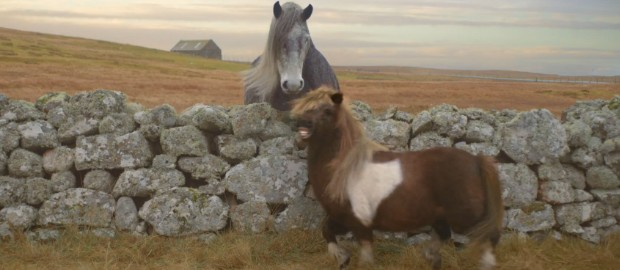 poney-shetland-moonwalking