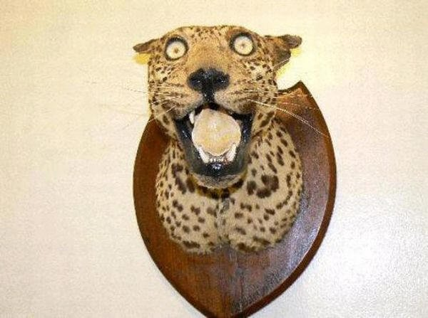 Taxidermie-fail-10