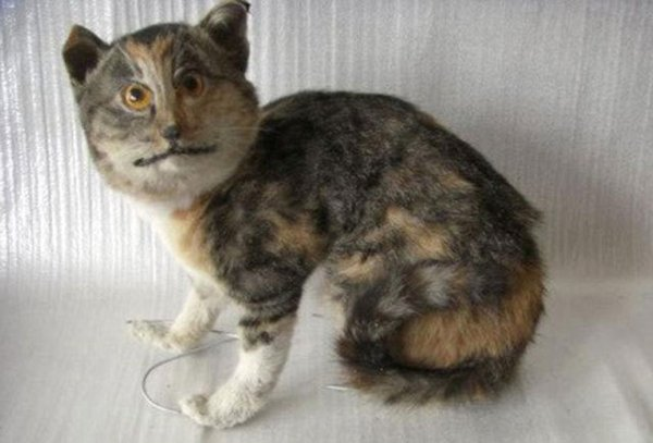 Taxidermie-fail-12