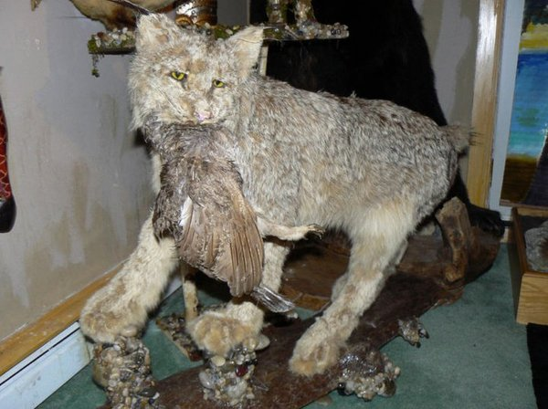 Taxidermie-fail-15