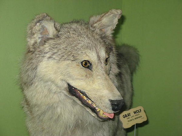 Taxidermie-fail-16