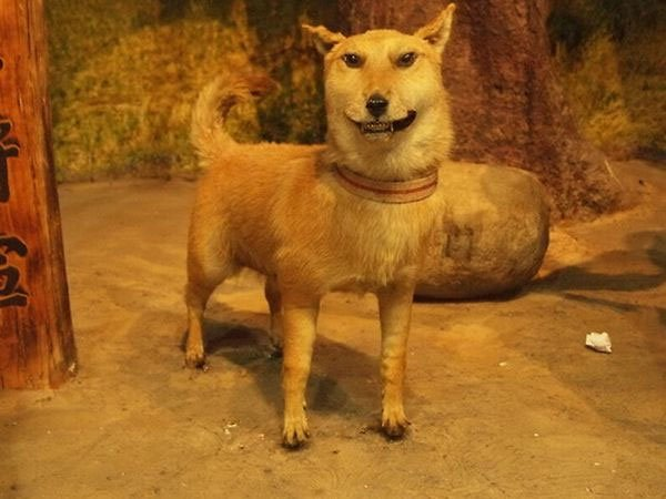 taxidermiste fail
