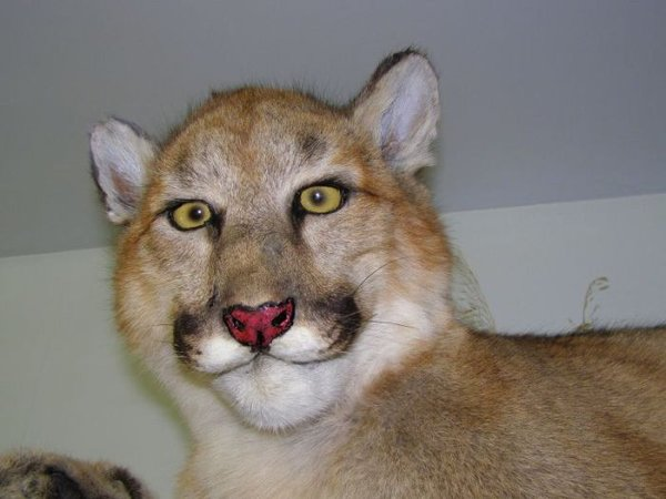 Taxidermie-fail-2