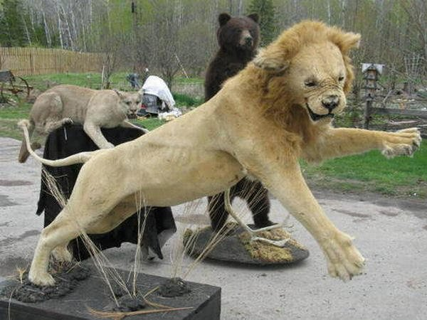 Taxidermie-fail-21
