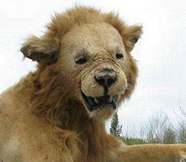 Taxidermie-fail-22
