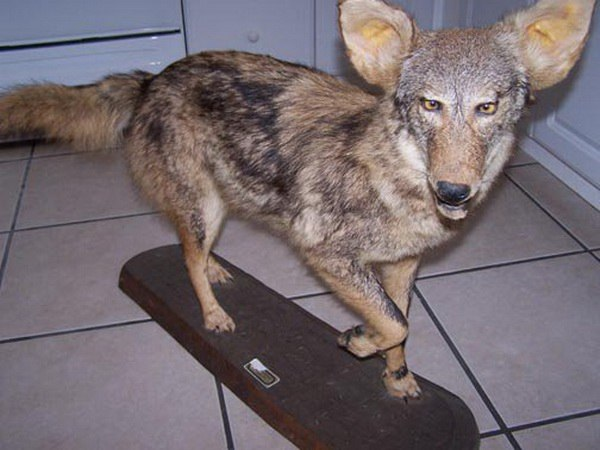Taxidermie-fail-23