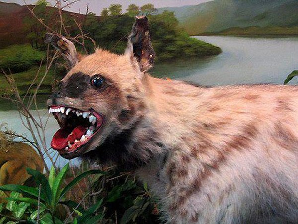 Taxidermie-fail-25