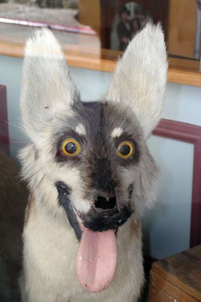 Taxidermie-fail-26