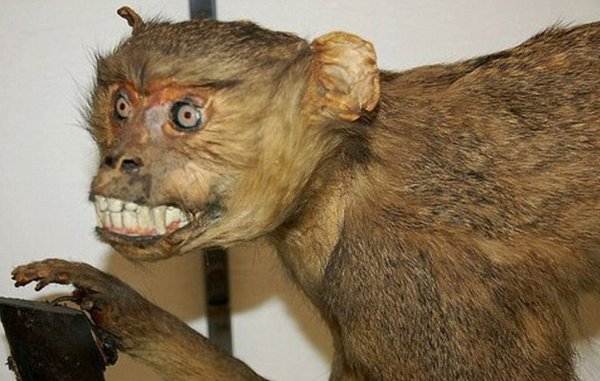 Taxidermie-fail-27