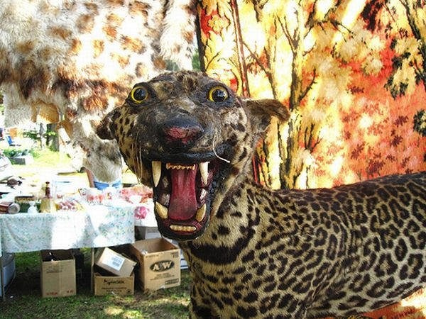 Taxidermie-fail-31