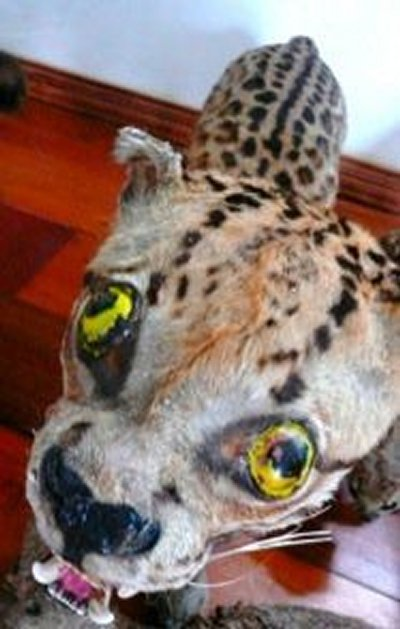 Taxidermie-fail-34