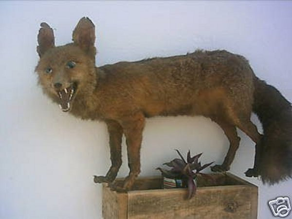 Taxidermie-fail-37