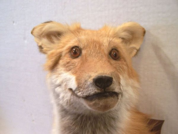 Taxidermie-fail-38