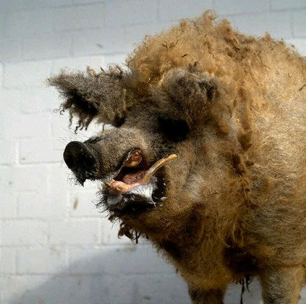 Taxidermie-fail-4