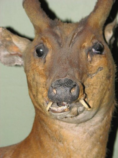 Taxidermie-fail-7
