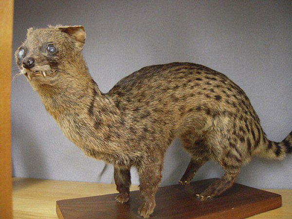 Taxidermie-fail-8