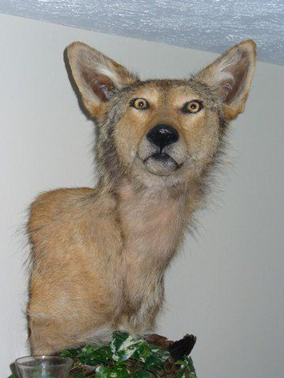 Taxidermie-fail-9