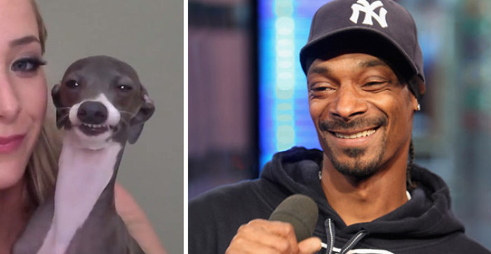 celebrity-look-alikes-animals-462__700