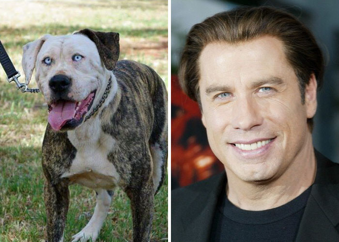 celebrity-look-alikes-animals-521__700