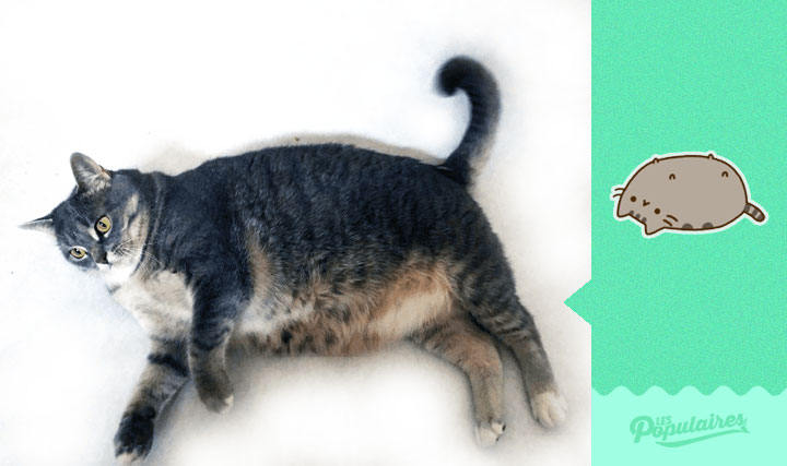 chat-obese-stickers-4