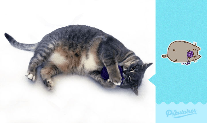 chat-obese-stickers-8
