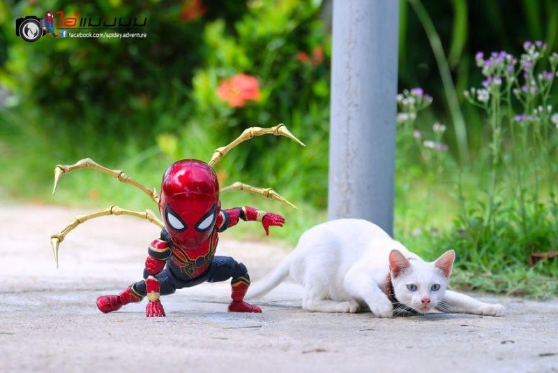Iron-Spider avec chat