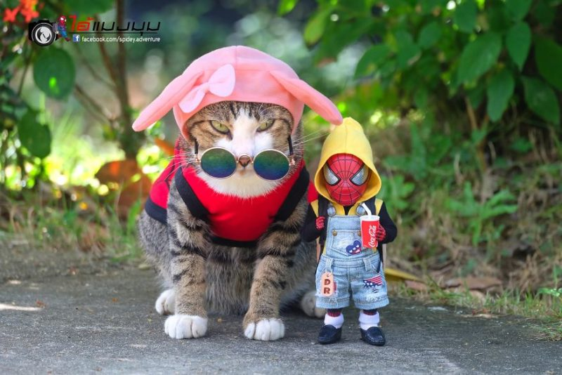 swag cat et spidey
