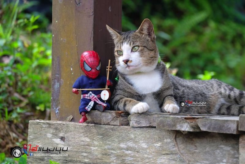 spidey cat