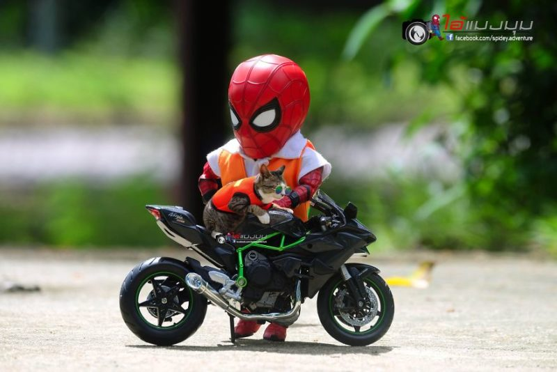 spider-man chat moto