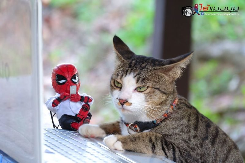 spider-man chat chill