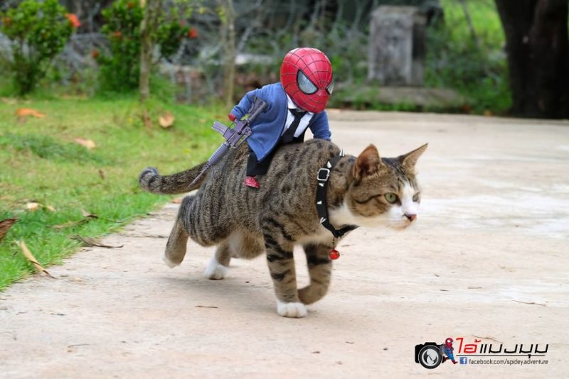 combat spider-man et chat