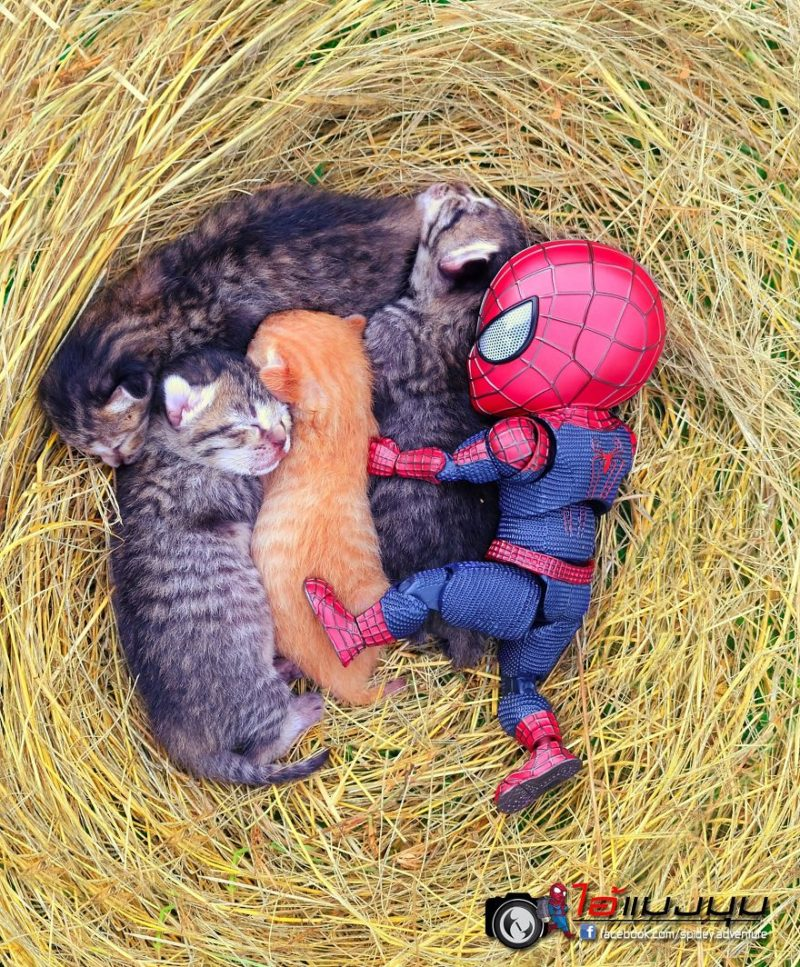 chatons et spidey